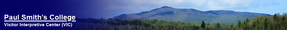 Saint Regis Mountain from the Barnum Brook Trail (16 May 2012)