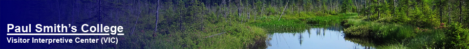 Barnum Bog from the Boreal Life Trail at the Paul Smiths VIC