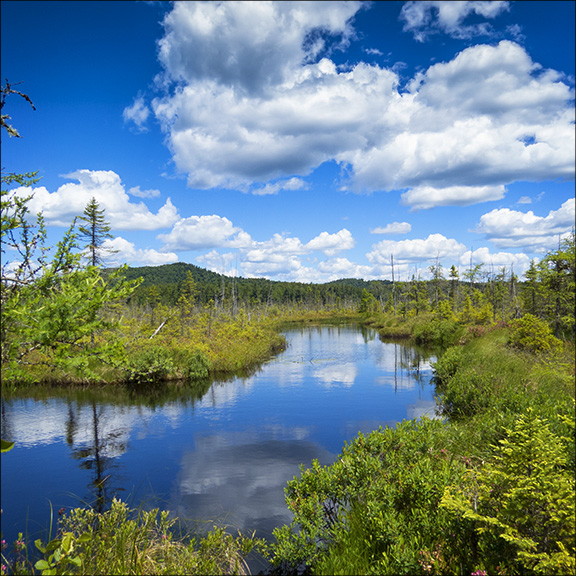 Guided Nature Walks: Barnum Bog from the Boreal Life Trail Boardwalk
