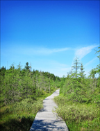 Paul Smiths Visitor Center -- Boreal Life Boardwalk across Barnum Bog