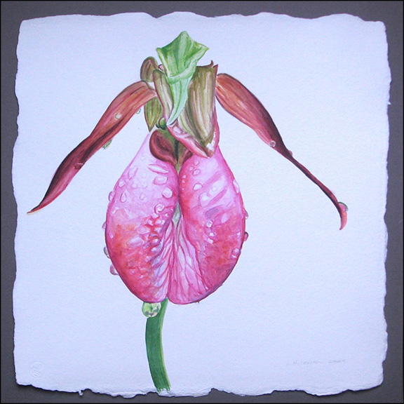 "Sandra Hildreth: ""Pink Lady's Slipper in the Rain"", watercolor, 16x16"